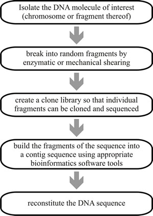 Sequencing Chart Ibovnathandedecker