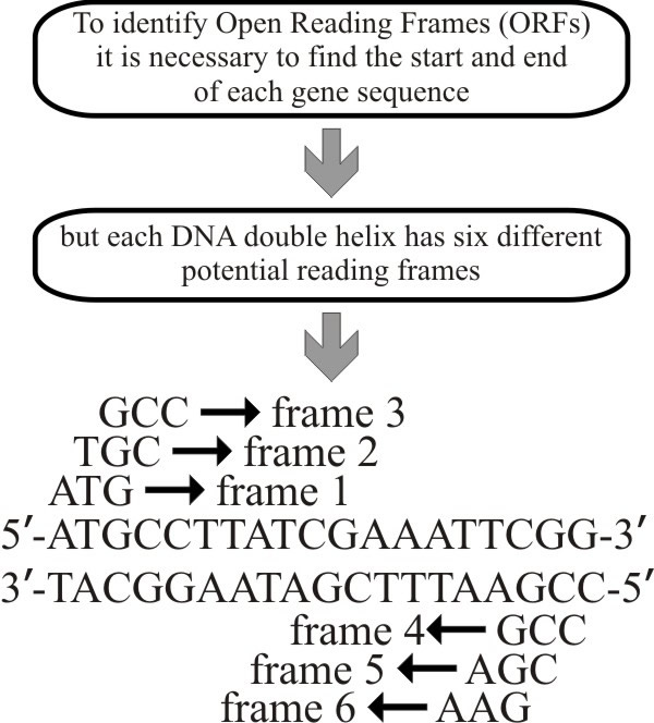 18.7 Annotating the genome